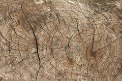 Textuur van boomstomp Royalty-vrije Stock Afbeeldingen