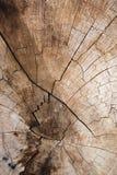 Textuur van boomstomp Stock Foto's