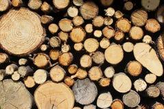 Textuur van brandhout in de zon Stock Foto