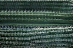 Textuur van cactus met naalden Royalty-vrije Stock Afbeelding