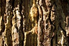 Textuur van cork Stock Afbeeldingen