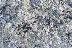 Textuur van de as Natuurlijke grijze achtergrond van gebrand hout Gebrande steenkolen stock fotografie