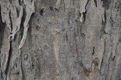 Textuur van de boom Stock Foto's