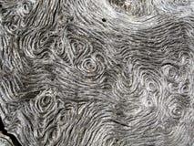 Textuur van de boomstam van een eik stock foto's