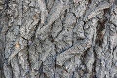 Textuur van de donkere schors van een boom Royalty-vrije Stock Foto