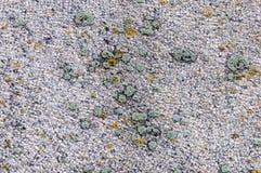 Textuur van de granietplak met korstmos Royalty-vrije Stock Afbeeldingen