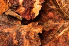 Textuur van de herfst de droge bladeren Stock Afbeelding