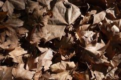 Textuur van de herfst droge bladeren Stock Afbeelding