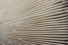 Textuur van de kieuwen van de paddestoel GLB - achtergrond stock fotografie