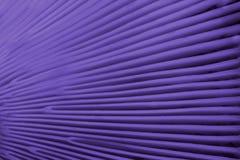 Textuur van de kieuwen van de paddestoel GLB - achtergrond - ultrav royalty-vrije stock foto's