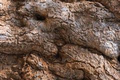 Textuur van de schors stock foto