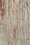 Textuur van de schors de bruine wilg Stock Afbeelding