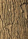 Textuur van de schors van een Linde royalty-vrije stock afbeeldingen
