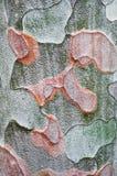 Textuur van de schors van een boom Stock Fotografie