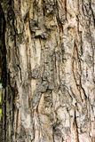 Textuur van de schors van een boom Stock Afbeelding
