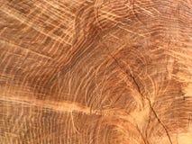 Textuur van de uitstekende achtergrond van de boomstomp stock fotografie
