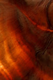 Textuur van de verlichte kroonslak Stock Fotografie