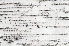 Textuur van de witte schors van de berkboom Stock Foto