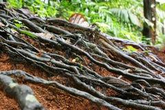 Textuur van de wortel Stock Foto's