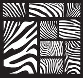 Textuur van de zebra Stock Afbeelding