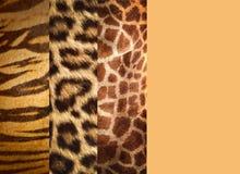 Textuur van dierlijke huiden Stock Afbeelding
