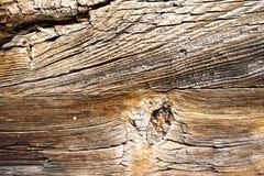 Textuur van donker hout Natuurlijke achtergrond Royalty-vrije Stock Afbeelding