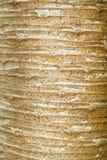 Textuur van Dracaena de boomstam van loureiriGagnep Stock Afbeeldingen