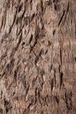 Textuur van droge boomboomstam Royalty-vrije Stock Fotografie