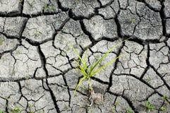 Textuur van droge grond Royalty-vrije Stock Afbeeldingen