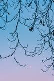 Textuur van Droge takjes met duidelijke blauwe hemel en maan in backgro Royalty-vrije Stock Afbeeldingen