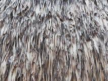 Textuur van droog die suikerpalmblad, als achtergrond, voor het maken van muur of dak van schuilplaats wordt gebruikt Royalty-vrije Stock Afbeelding