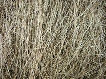 Textuur van droog gras Stock Foto