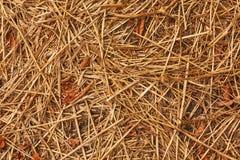 Textuur van droog gras Stock Afbeelding