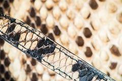 Textuur van echte snakeskin Royalty-vrije Stock Foto