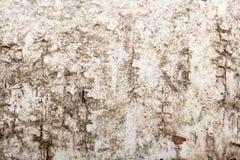 Textuur van een berkeschors, onscherp rond de randen Stock Fotografie
