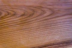 Textuur van een eiken boom, achtergrond royalty-vrije stock afbeeldingen
