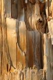 Textuur van een gebroken boom royalty-vrije stock foto's