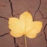Textuur van een geel de herfstblad gevallen aan de grond Stock Afbeeldingen