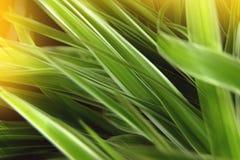 Textuur van een groen blad Stock Fotografie