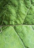 Textuur van een groen blad als abstract achtergrond macroinstallatiepatroon Royalty-vrije Stock Fotografie