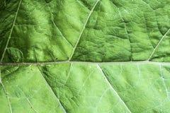 Textuur van een groen blad als abstract achtergrond macroinstallatiepatroon Stock Afbeelding