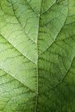 Textuur van een groen blad als abstract achtergrond macroinstallatiepatroon Royalty-vrije Stock Afbeelding