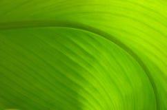 Textuur van een groen blad als achtergrond Royalty-vrije Stock Foto's