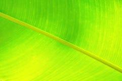 Textuur van een groen blad als achtergrond Royalty-vrije Stock Afbeelding