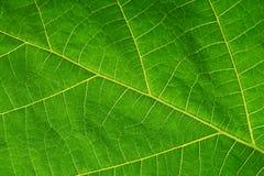 Textuur van een groen blad als achtergrond Stock Foto