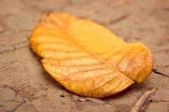 Textuur van een helder oranje blad die op de grond in de gouden herfst liggen Royalty-vrije Stock Foto