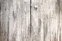 Textuur van een oude boom Stock Foto