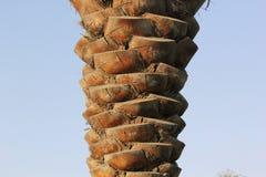 Textuur van een Palmschors Natuurlijk patroon Stock Fotografie