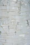 Textuur van een schors Stock Fotografie