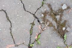 Textuur van gebarsten asfalt royalty-vrije stock afbeeldingen
